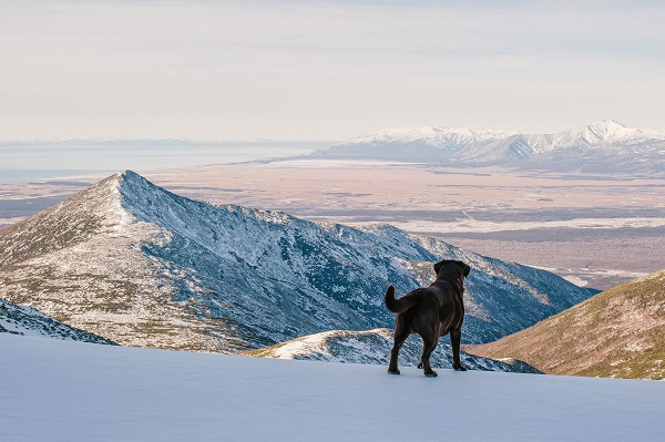 tips for winter camping with dog